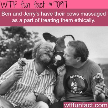Ben and Jerry's cows get massaged - WTF fun facts