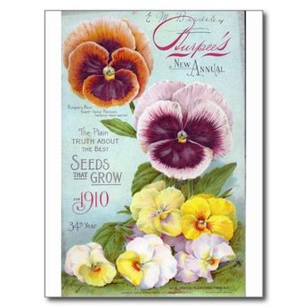 Vintage Pansies Post Cards #pansies #pansy #vintage #shabbychic #shabby #chic