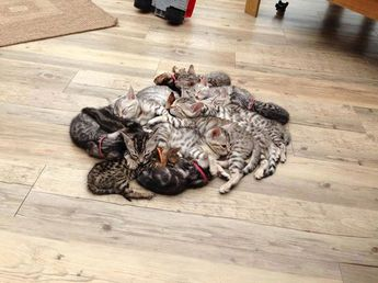"keikozakky: ""Cat A pile of kittens """