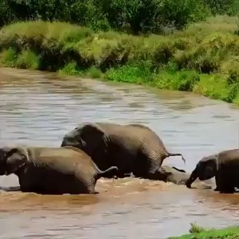 Elephants looking after their your crossing a dangerous river. #Elephant #nature #wildlife #family #love