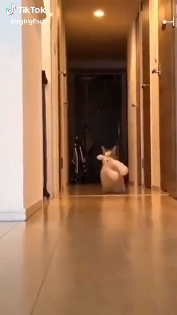 #cat #catvideo #catvideos #catsofday #cats_today #funnycats #funnycatsvideo