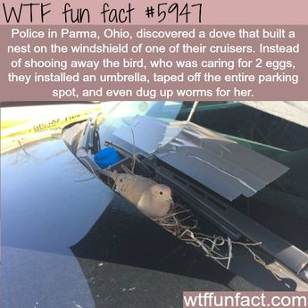 WTF Fun Facts Dump larger then the one I had yesterday