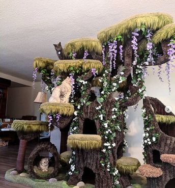 Company built the most magical cat tree for this special needs kitty and I've​ never seen anything like it