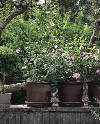 5, 4, 3, 2, 1 … på en älskad trädgårdsmur + älskade krukor! (Svante Öquist)