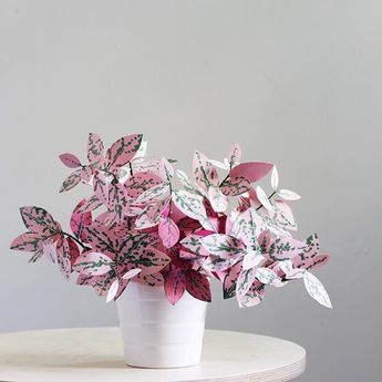 Paper Chinese Money Plant DIY