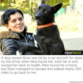 Dog walks 200 MILES to find the woman who cared for it