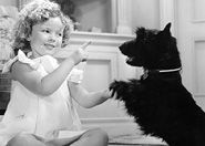 Shirley Temple loved her Scottish Terrier, Corky.