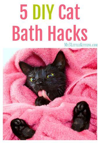 5 DIY Cat Bath Hacks - My 3 Little Kittens