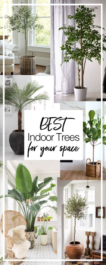 Best Indoor Trees & How to Care for Them