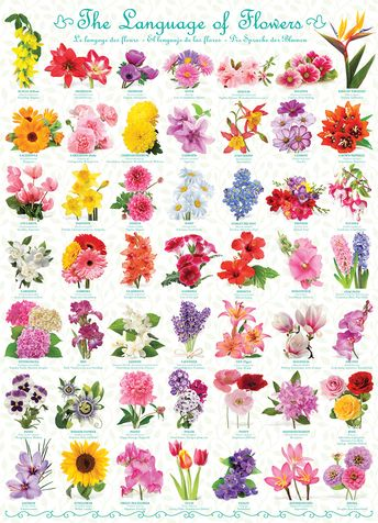 "The Language of Flowers is a 1000 piece jigsaw puzzle from EuroGraphics. Puzzle measures 19.25"" x 26.625"" when complete."