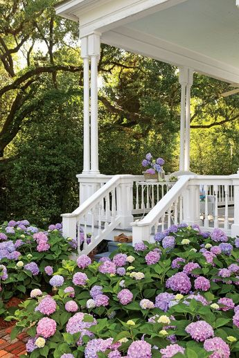 The Most Iconic Southern Plants