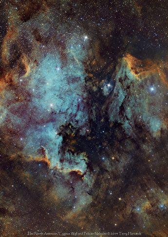 The North American, Cygnus Wall and Pelican Nebulae
