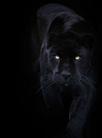 Black on Black! by Sue Demetriou, via 500px