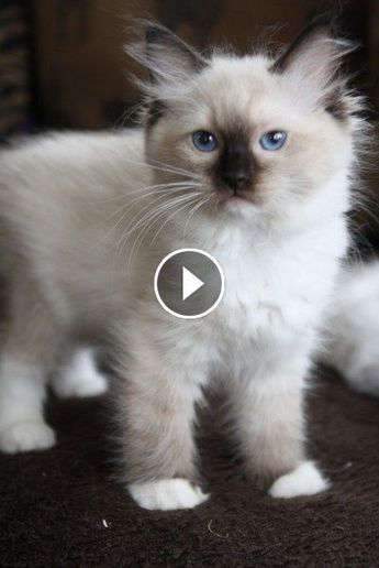Video CATS will make you LAUGH YOUR HEAD OFF - Funny CAT compilation - 9jo8lidqxg