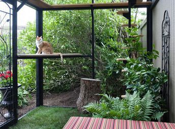 Yes, Catios — Also Known As Cat Patios — Are a Thing
