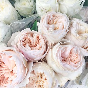 Pink garden roses via @kristenmarienichols