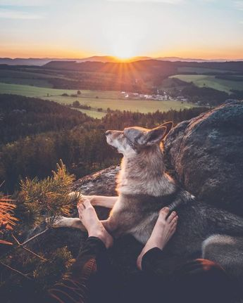 Lassé des photos de couple sur Insta ? Ce mec câline son chien sur ses photos de voyage et c'est 1000 fois mieux !