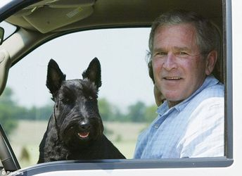 Farewell, Barney! George W. Bush announces death of his beloved former first dog after a bout with lymphoma