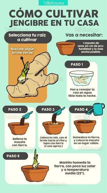 How to Grow Garlic -