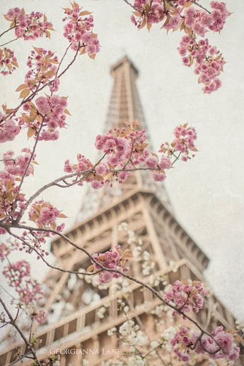 Paris Photography - Eiffel Tower with Cherry Blossoms, Spring in Paris, Travel Fine Art Photograph, Large Wall Art