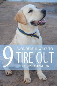 9 Wonderful Ways to Tire Out your Labrador