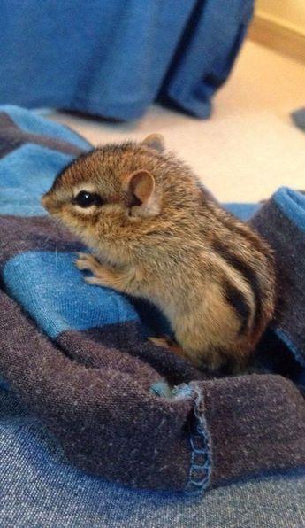 A baby chipmunk.