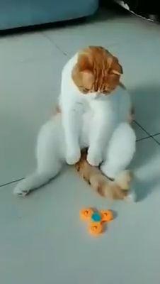 #cats #cutecat #lovelycats #kittens #cutekittens #furbaby #cutepussycat #meow #adorablecats #cutestcats #catworld #coolcats
