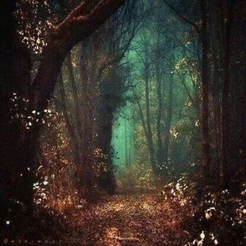 The enchantment of woods