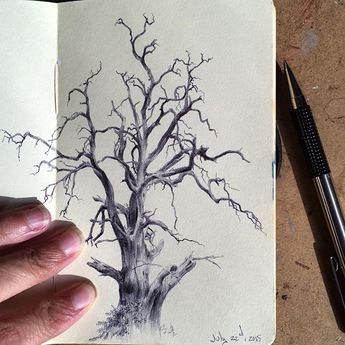 The first drawing from my upcoming project, a series of 126 tree portraits, yet to be appropriately named- #drawanyway