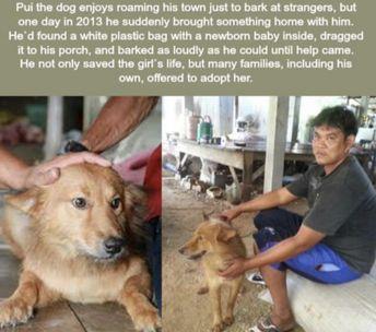 She's a hero! (OC: u/JustSomeGuy_IDK, Crosspost from r/Animalsbeingbros)
