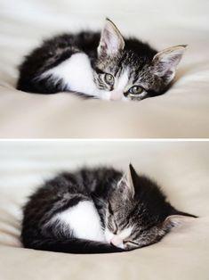 Lustige Katzen und Kätzchen - Cutie Patooties - #Cutie #Kätzchen #Katzen #Lustige #Patooties #und