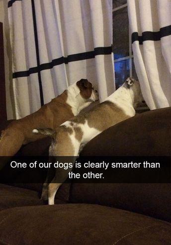 16 snaps hilarants inspirés par nos chiens