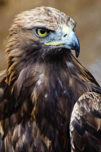 Focused. by James McClave on 500px
