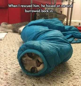 Funny Animal Pictures Of The Day - 19 Images