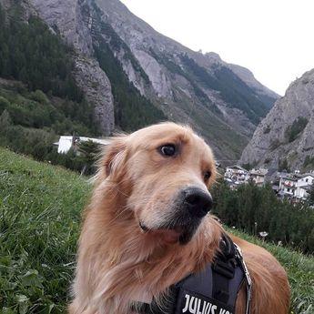 #relax #montagna #goldenretriever #aaron  #relax #montagna #goldenretriever #aaron