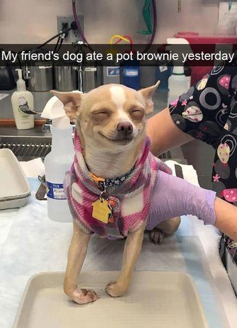 20 Funniest Dog Snapchats
