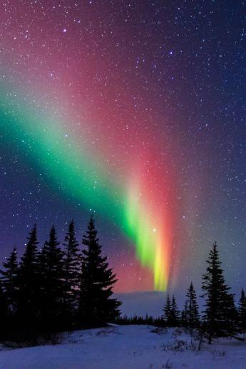 Aurora Over The Trees Of Churchill Manitoba by David Marx via 500px.