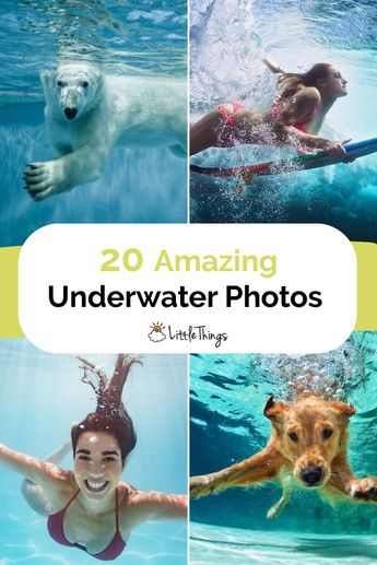 20 Underwater Photos That Will Make You Want To Go Swimming: Underwater photography is quite a bit different from regular photography. Here are 20 stunning underwater photos that will make you want to run to the beach today.