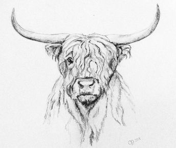 List of cow drawing pencil sketch artists image results | Pikosy