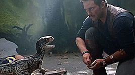 Owen Grady // Jurassic World: Fallen Kingdom // Chris Pratt
