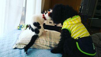 仲良しの時もあるんだけどね⁉️ ほんの一瞬で、やっぱり駄目なのかなと心が折れる事も。 そうそう少しずつ。  #愛犬 #愛猫 #キス #お嬢様うぬ