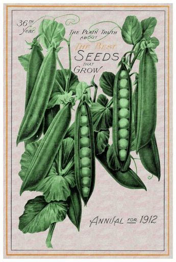 """Marmont Hill MH-FMKIT-183-C-30 30 Inch x 20 Inch """"Peas"""" Giclee Art Print on Stre Home Decor Wall Decor Paintings and Prints"""