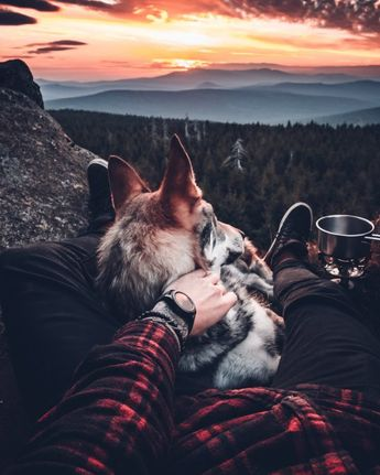 Honza Reh?cek pets his Czechoslovakian wolfdog named Sitka in the Czech Republic. See SWNS copy SWCAdog: An instagrammer has captured thousands of hearts with his photos of him petting his dog in stunning locations. Czech photographer Honza Reh?cek says he loves travelling but cant do its without his best buddy Sitka a Czechoslovakian wolfdog who tags along everywhere. The four-year-old dog, named after an Alaskan city has travelled throughout the Czech Republic with Honza, and helped him amass