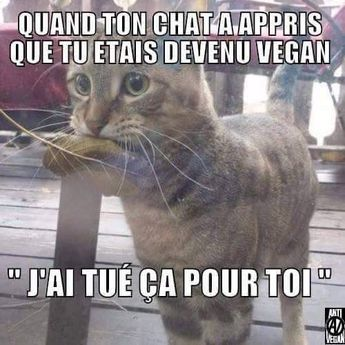 vegan veganisme humour lol chat mdr drole animal