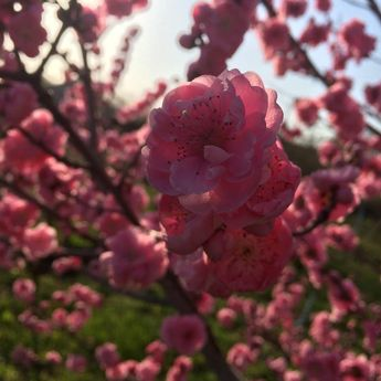 Spring #instagood #bestoftheday #instacool #lkl #beautiful #instalike  Spring #instagood #bestoftheday #instacool #lkl #beautiful #instalike
