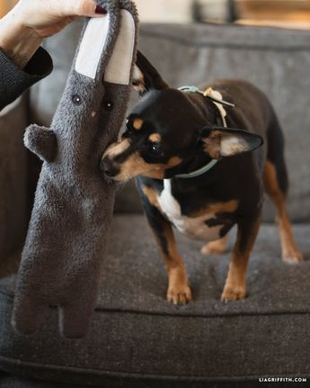 Make a DIY Dog Toy for your Furry Friends