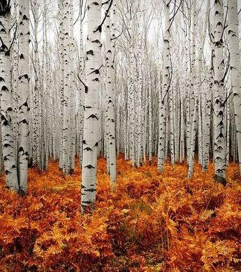 Les plus beaux paysages du monde : découvrez la Nature à travers de spectaculaires photos