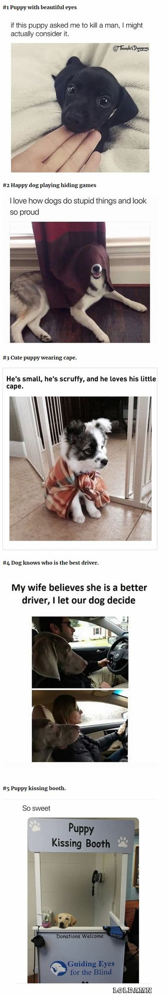 10 Dog Memes Today!#4 Dog knows who is the best driver.