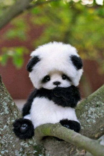 Top 10 Images Of Cute Animals (VIDEO)