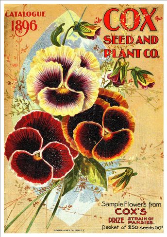 """""""Cox Seed & Plant Co, 1896"""" Beautiful Vintage Seed Catalogue Cover Art Print"""